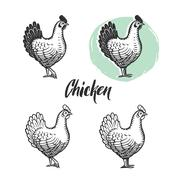 Chicken logotypes set. Hen meat and eggs vintage produce elements. Stock Illustration