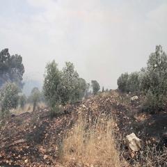 Forest Fire in Jeruslaem Israel Stock Footage
