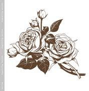 Hand sketched bouquet of white roses in vintage engraving style. Stock Illustration