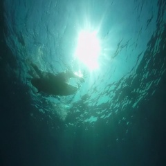 SLOW MOTION UNDERWATER: Young surfer man paddling on a surf in open water ocean Stock Footage