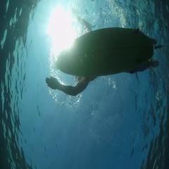 SLOW MOTION UNDERWATER: Surfer sportsman paddling on a surf in open water ocean Stock Footage