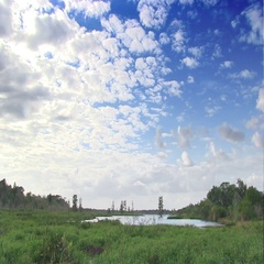 Nature reserve in Florida Stock Footage