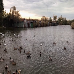 Ducks and gulls on the lake greedily eating  Stock Footage