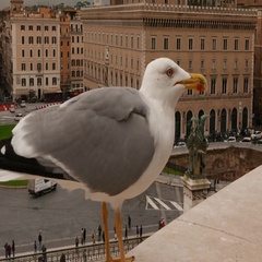 Sea gull sitting on the National Monument in Rome Stock Footage