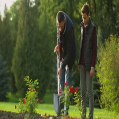Father Diggs with a Shovel in the Garden while Son Watches. Stock Footage