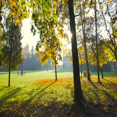 People in a beautiful park in autumn at sunset Stock Footage