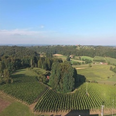 Drone shot of flat landscape with vineyards in front 4K Stock Footage