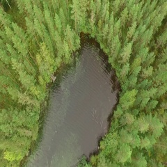 Small bay with a wooden dock at a clear-watered Nordic forest lake, aerial shot Stock Footage