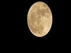 November Beaver Moon Waning Gibbous Real Time.  Jet Fly By. Stock Footage