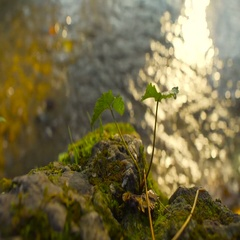 Small plant and rocks near quiet water flowing at sunset Stock Footage