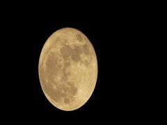 November Beaver Moon Waning Gibbous Time Lapse Stock Footage