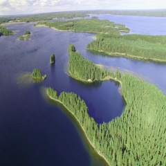 Seagull flying under camera by a lagoon island at lake Saimaa in Finland, aerial Stock Footage