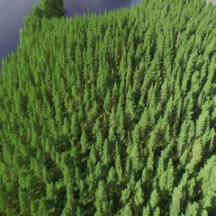 Coniferous forest of a lagoon island at lake Saimaa in Finland, aerial tilt shot Stock Footage