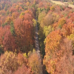 Family car travel in fall through colorful forest road 4K Stock Footage