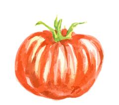Isolated watercolor tomato. Stock Illustration