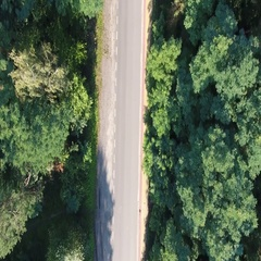 Road cutting through a forest Stock Footage