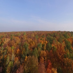 Aerial view autumn forest top view Stock Footage
