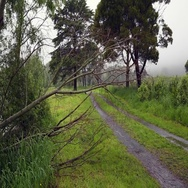 Fallen tree branch shaking from flooded river flow Stock Footage