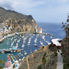 The beautiful Catalina Island Stock Footage