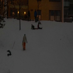 Kids sledding on snow on a hill enjoying the first snow Stock Footage