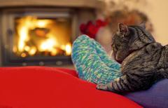 Woman relaxes by warm fire and gray cat . Stock Photos