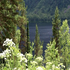 View of Lake Teletskoye in the Altai Republic Stock Footage