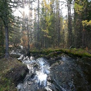 The river runs in the forest among the trees Stock Footage