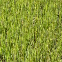 Beauty green grass close up Stock Footage