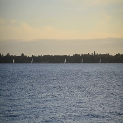 Several yacht with sails move on blue water far off Stock Footage