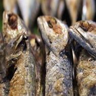 Thai fried short-bodied mackerel, local popular fish for Thailand Stock Footage