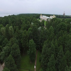 Wedding couple in Peterhof park. 4K aerial shot Stock Footage