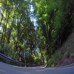 Vehicle drive POV car travel beautiful nature curvy road green forest tree sunny Stock Footage