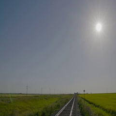 Railroad next to vibrant yellow Canola field in Manitoba with trucks driving on Stock Footage