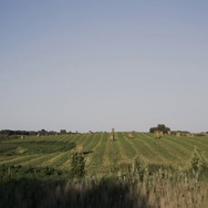 Pan left to right of hay bails in field behind wire fence in Manitoba Stock Footage