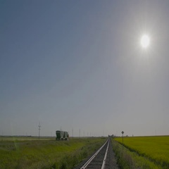 Railroad next to yellow Canola field in Manitoba with trucks driving on nearby Stock Footage