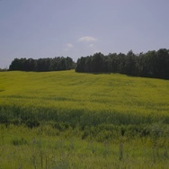 Calm Canola field during sunny day in Manitoba Stock Footage