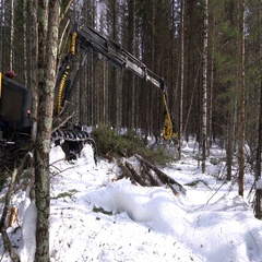 Forestry. View of logger cuts spruce trunk Stock Footage