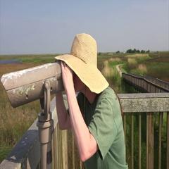 Woman Looking Through Binoculars at Sabine National Wildlife Refuge Stock Footage