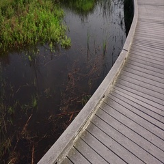 Boardwalk Through Marsh in Sabine National Wildlife Refuge in Louisiana Stock Footage