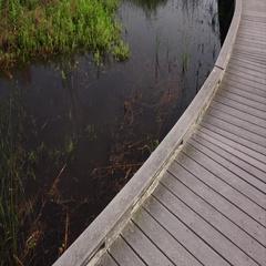 Tourists Walk on Boardwalk Through Wetlands Marsh in Louisiana Stock Footage