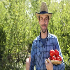 Confident Gardener Man Presentation Hold Red Tomato Show Thumb Up Sign to Camera Stock Footage