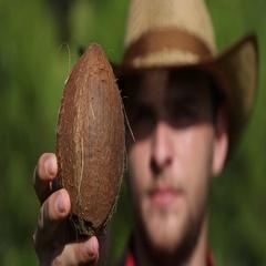 Closeup Farmer Portrait Showing Organic Coconut Examine Fruit Quality Bio Garden Stock Footage