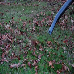 Blowing autumm leaves at the end of the afternoon Stock Footage