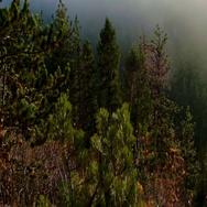 Estes Park Colorado Foggy Forrest Pan Stock Footage