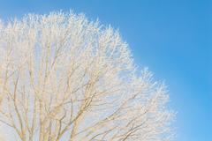 Nice winter weather scenery frosty morning Stock Photos