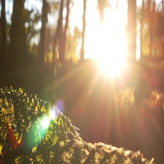 Person running in the forest during the autumm sunset Stock Footage