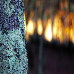 Texture of a tree during the sunset Stock Footage