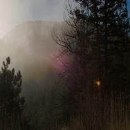 Estes Park Colorado Foggy Forrest  Stock Footage
