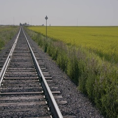 Bird Flying away and back to sign by Railroad next to yellow Canola field in Stock Footage