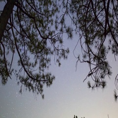 MoCo Astro Timelapse Tracking Shot of Stars thru Pine Trees Low Angle -Zoom Out- Stock Footage
